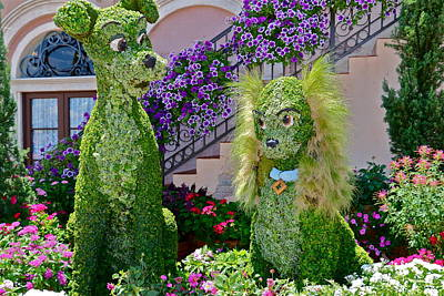 Photograph - Lady And The Tramp Topiary by Denise Mazzocco
