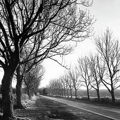 Monochrome Photograph - Lady Anne's Drive, Holkham by John Edwards