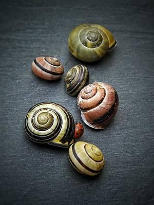 Lady Bug And Snail Shells 1 Art Print