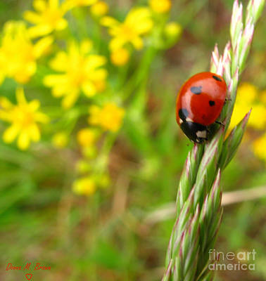 Donna Brown Photograph - Lady Bug II by Donna Brown