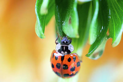 Photograph - Lady Bug In A Heatwave by Brian Hale