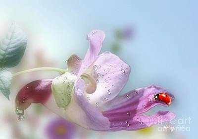 Photograph - Lady Bug On Flower by Morag Bates