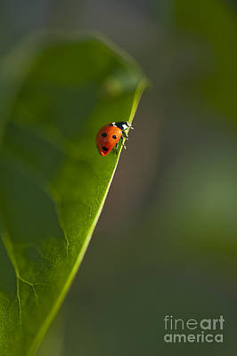 Photograph - Lady Bug Ready For Takeoff by Jim Corwin
