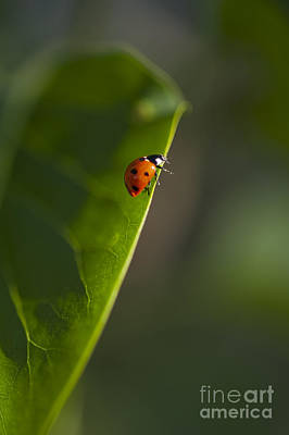 Photograph - Lady Bug Ready To Fly by Jim Corwin