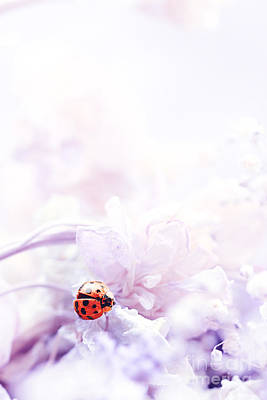Lady Bug Art Print by Stephanie Frey