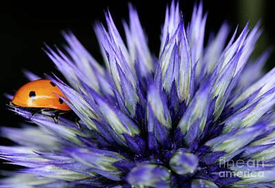 Photograph - Lady Bug by Terry Elniski