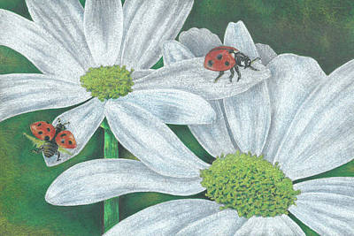 Drawing - Lady Bugs by Troy Levesque