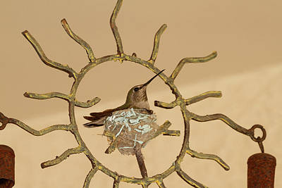 Lady Hummingbird On Her Nest Art Print