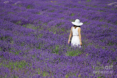 Lady In Lavender Field Art Print