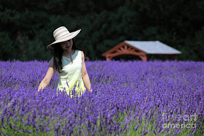 Lady In Lavender Art Print