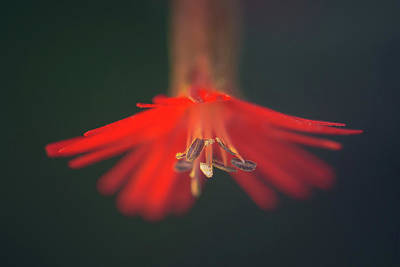 Photograph - Lady In Red by Alexander Kunz