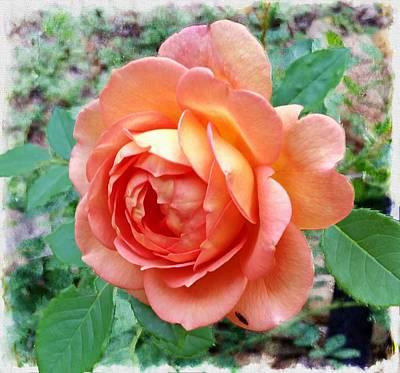 Photograph - Lady Of Shalott Rose by Joe Duket
