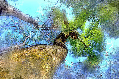 Mighty Oak Photograph - Lady Of The Woods by HH Photography of Florida