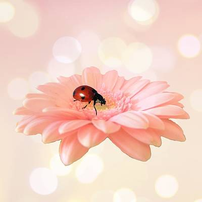 Lady Bug Photograph - Lady On Pink by Sharon Lisa Clarke