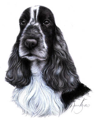 Cocker Spaniel Drawing - Lady  by Renata Clare