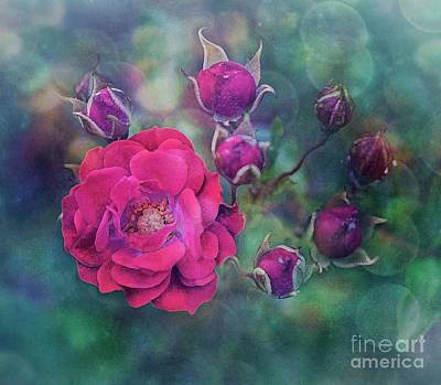 Photograph - Lady Rose by Ezo Oneir