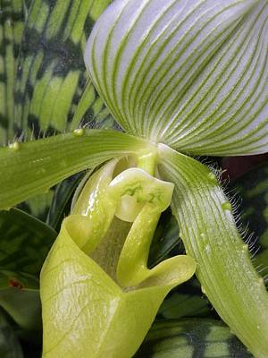 Modern Sophistication Beaches And Waves - Lady Slipper Orchid by CL Redding