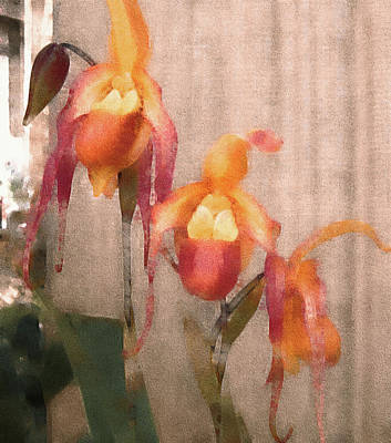 Lady Slipper Orchids Art Print by Susan Maxwell Schmidt
