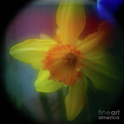 Holga Toy Camera Photograph - Lady Spring 1 by Paul Anderson