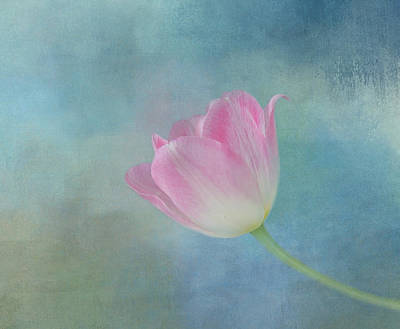 Photograph - Lady Tulip by Kim Hojnacki