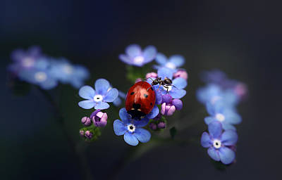 Ladybird And Ant Art Print by Ellen van Deelen