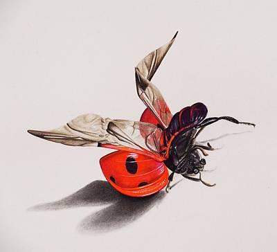 Ladybug Drawing - Ladybird by Biophilic Art