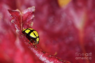 Photograph - Ladybird Eating By Kaye Menner by Kaye Menner