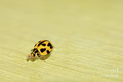 Photograph - Ladybird Swimming By Kaye Menner by Kaye Menner