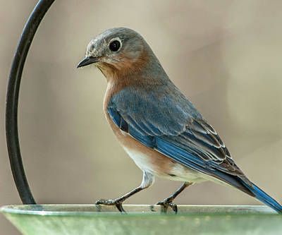 Photograph - Ladybluebird Of Happiness by Jim Moore