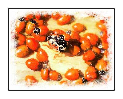 Digital Art - Ladybug Aggregation by Rusty R Smith