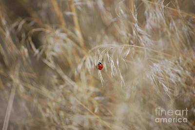 Photograph - Ladybug Dances On Prairie Grass At Buffalo Jump by Rose De Dan