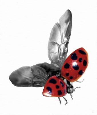Black-and-white Photograph - Ladybug Flying by Katrina Britt