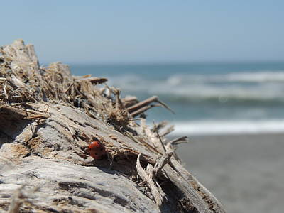 Agate Beach Oregon Photograph - Ladybug In Driftwood by Traci Hallstrom