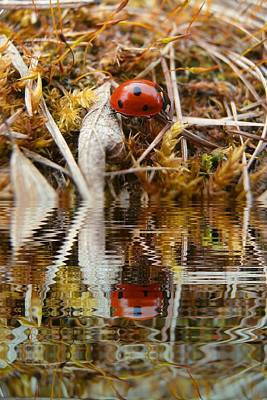 Book Quotes - Ladybug in grass with water refections by Miroslav Nemecek