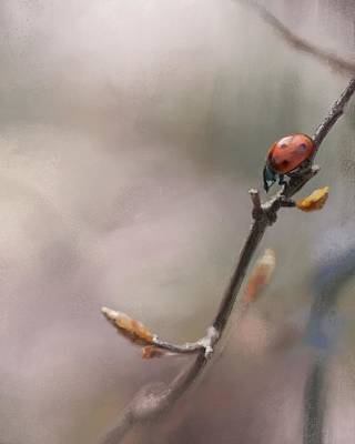 Digital Art - Ladybug by Konstantin Kolev
