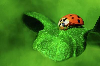 Photograph - Ladybug, Ladybug by Nikolyn McDonald