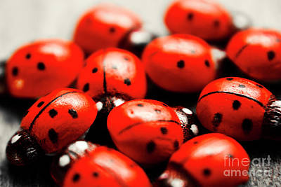 Ladybug Wall Art - Photograph - Ladybug Luck by Jorgo Photography - Wall Art Gallery