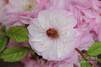 Photograph - Ladybug Lullabye by Donna L Munro
