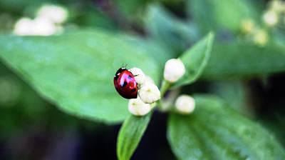 Ladybug Digital Art - Ladybug by Nat Air Craft