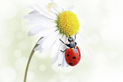 Ladybug On Daisy Flower Art Print by Pics For Merch
