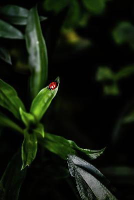 Digital Art - Ladybug by Tommytechno Sweden