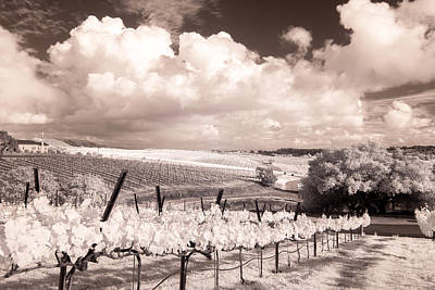 Central Coast Winery Photograph - Laetitia Winery by James ODonnell