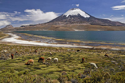 Photograph - Lago Chungara And Volcan Parinacota by Michele Burgess