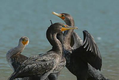 Photograph - Lagoon Buddies by Fraida Gutovich