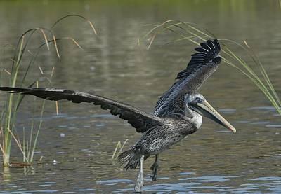 Photograph - Lagoon Takeoff 2 by Fraida Gutovich
