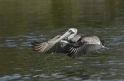 Photograph - Lagoon Takeoff 3 by Fraida Gutovich