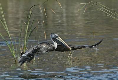 Photograph - Lagoon Takeoff by Fraida Gutovich