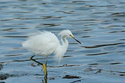 Photograph - Lagoon Walk 2 by Fraida Gutovich