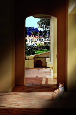 Photograph - Laguna Beach Cat by Diana Angstadt