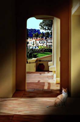Photograph - Laguna Beach Cat by Diana Angstadt